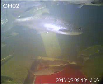 vlcsnap-2016-06-01-12h44m27s901